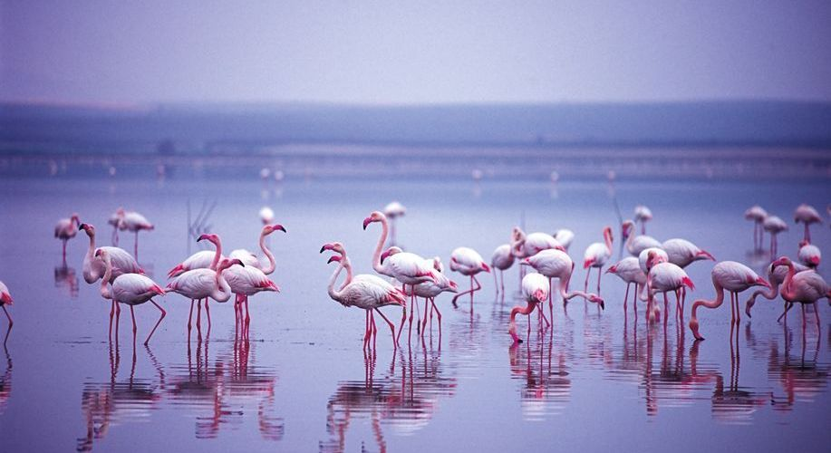There's an option to see the wild flamingos reserve in season.  (Photo: J. Hidalgo / Turismo Costa del Sol)