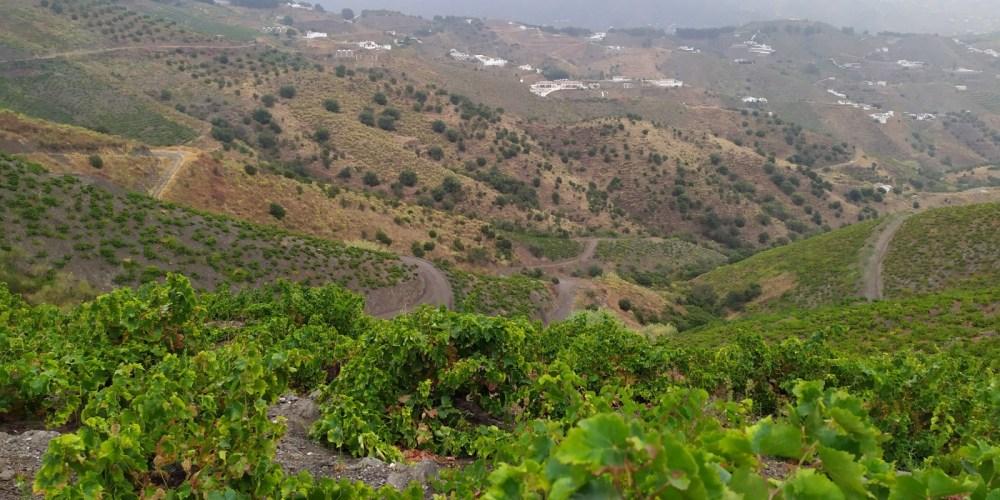 Por si la cata de grandes vinos fuera poco, las sensacionales vistas le cautivarán desde el principio.