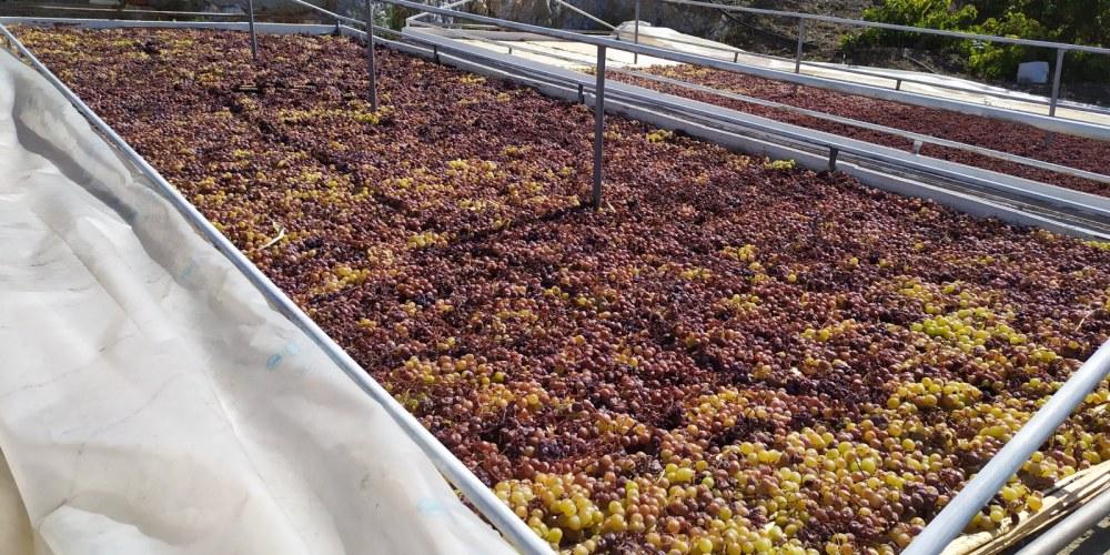 Vistas de paseros de uva pasa; nos acercaremos al método de producción de vinos dulces.