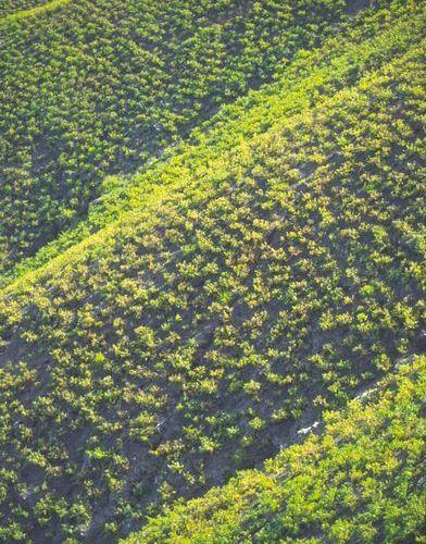 Imágenes de viñedos sobre las escarpadas laderas que nos deleitan al volante (Foto; J. Hidalgo / Turismo Costa del Sol).