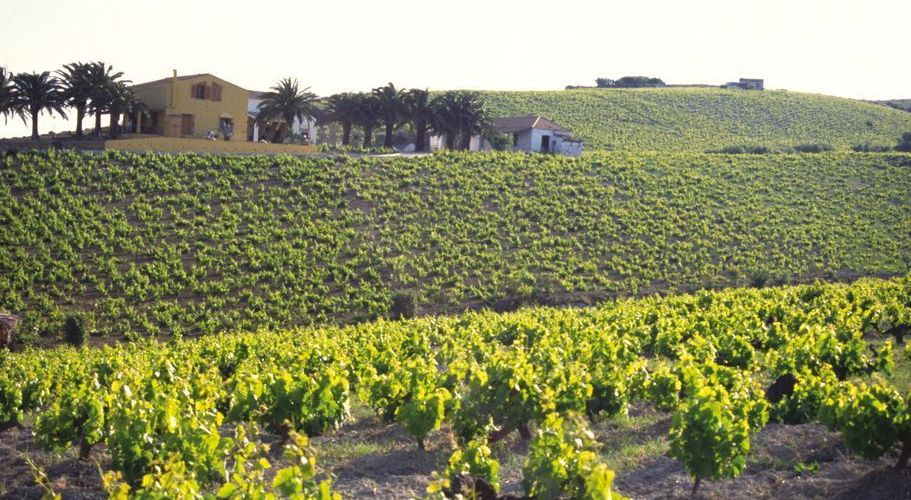 Los viñedos de Manilva son una auténtica delicia (Foto: Consejo Regulador D. O.)