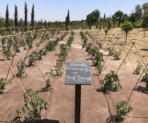 ¡La cosecha propia por encima de todo! El cultivo de huertas favorece la biodiversidad y la agricultura ecológica.