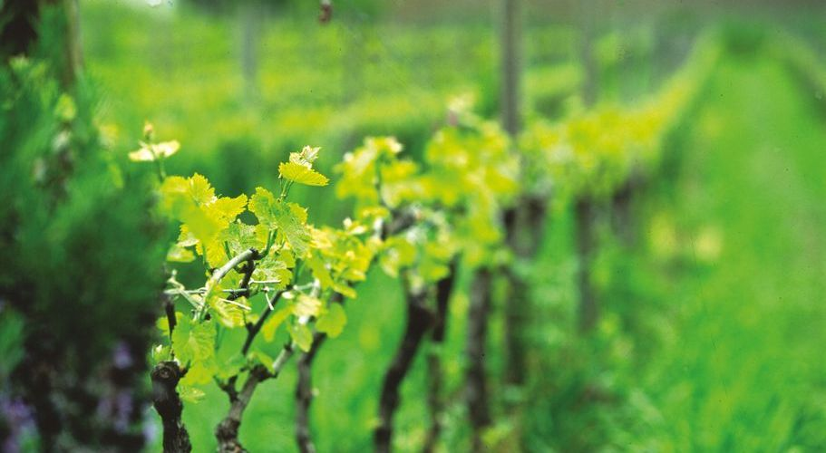 Before long you will be exploring the vineyards. (Photo: M. A. Toro / Turismo Costa del Sol)