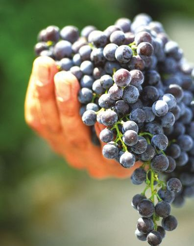 The Ronda area is known for its excellent red wines. (Photo: J. Hidalgo / Turismo Costa del Sol).