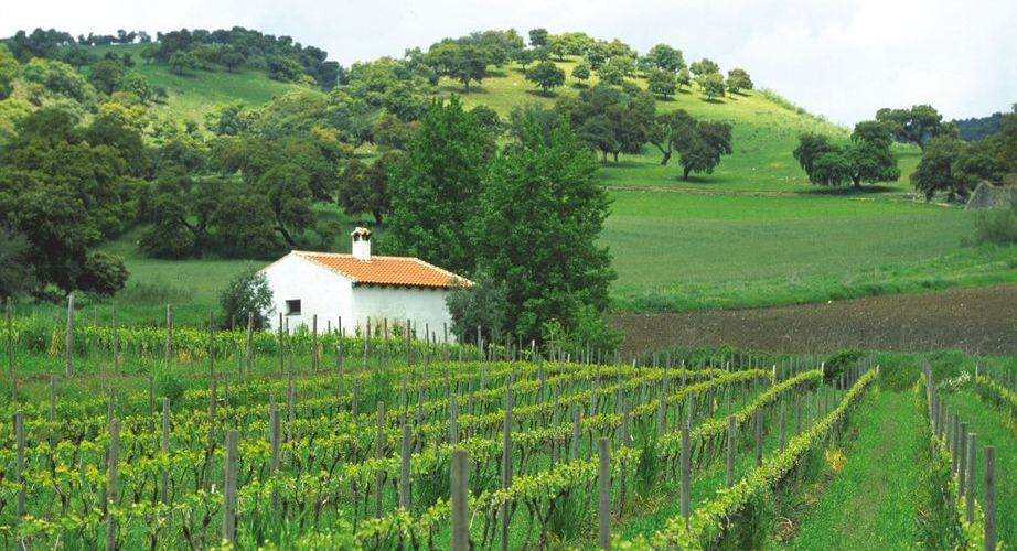 Lush green vineyards in the lower valley on your memorable day trip. (Photo: J. Hidalgo / Turismo Costa del Sol).