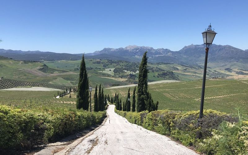 Learn why this impressive terrain is ideal for winemaking.