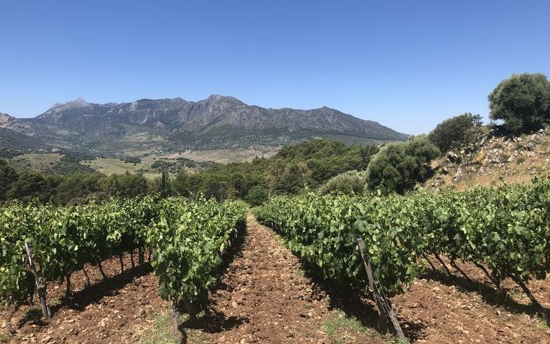 Our vineyard trips get you close to the land to understand more about growing techniques.